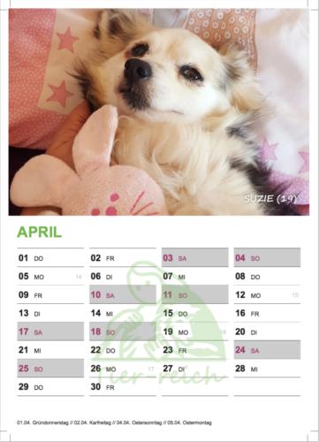 kalender 21 suzie