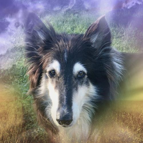 lassie nachruf
