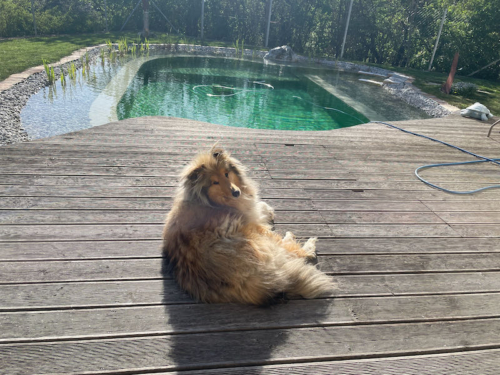 seeley schwimmteich
